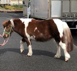 お馬さんに乗ってみよう! <麻布大学>