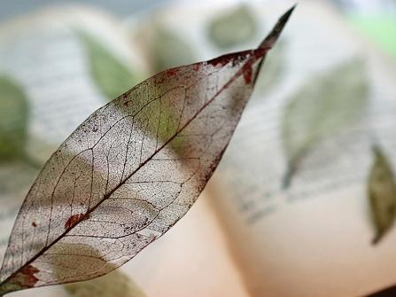 木の葉できれいな 葉脈しおりをつくろう <神奈川大学>